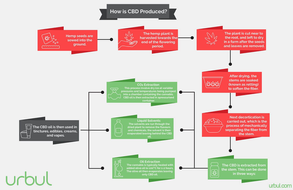 infographic showing how CBD is created